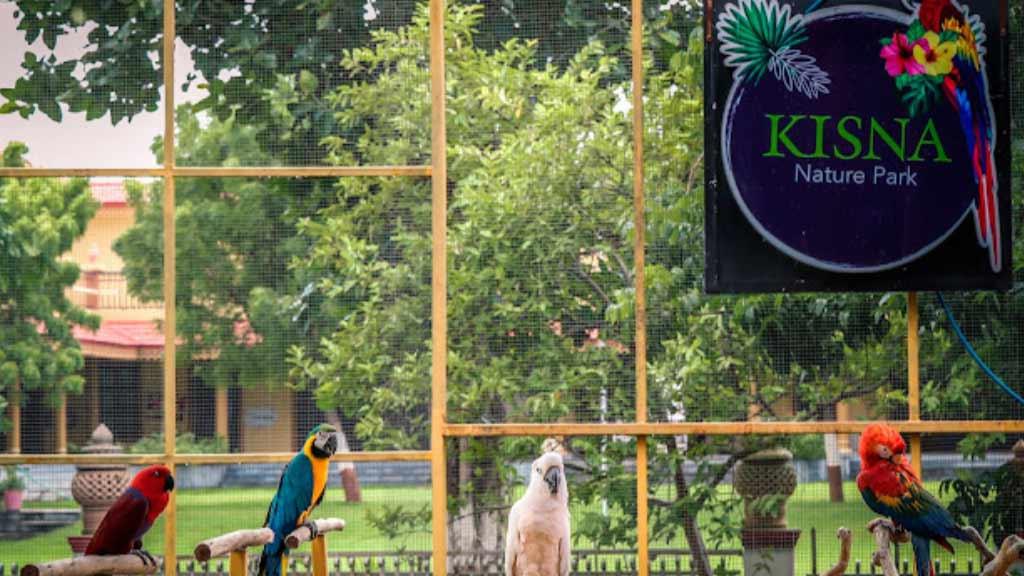 Birds in Kisna Nature Park
